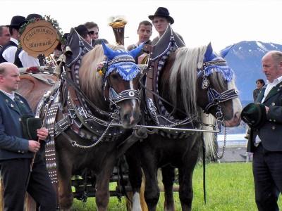 Geschmücktes Pferdegespann