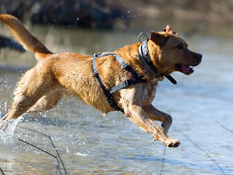 Urlaub mit Hund Chiemsee