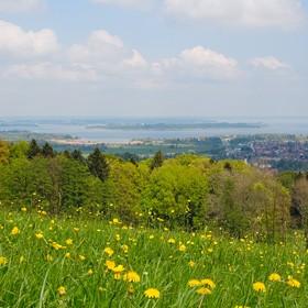 Sommerwiese Chiemgau